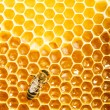 Bees work on honeycomb — Stok fotoğraf