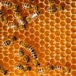medové plástve a včelí práci — Stock fotografie
