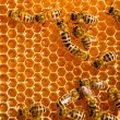 Honey comb and a bee working — Foto de Stock