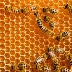 pente do mel e uma abelha a trabalhar — Foto Stock
