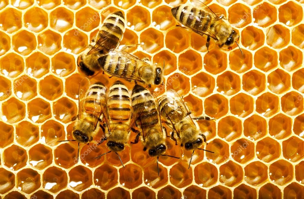 Bees works on honeycombs — Stock Photo #13153525