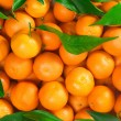 Oranges — Stock Photo #16911421
