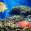 Colorful underwater world - Photo