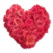 Rose Flowers Heart with water drops on white. Valentine. Love - Stok fotoraf