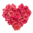 Stock Photo: Rose Flowers Heart on white. Valentine. Love