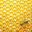 Close up view of the working bees on honey cells — Stock Photo #21806195