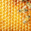 Close up view of the working bees on honey cells - Stockfoto