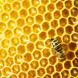 Close up view of the working bees on honey cells — Stockfoto