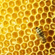 Close up view of the working bees on honey cells - 图库照片