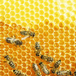 Close up view of the working bees on honey cells — Stock Photo #21806379