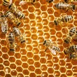 Close up view of the working bees on honey cells — Stock Photo #21806787