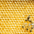 Close up view of the working bees on honey cells — Stock Photo #21807277