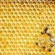 Stock Photo: Close up view of working bees on honey cells