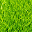 Healthy grass and soil - Stock Photo