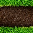 Healthy grass and soil — Stock Photo