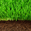 Healthy grass and soil - Stok fotoğraf
