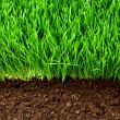 Healthy grass and soil - Zdjęcie stockowe