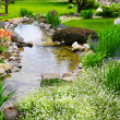 Spring flowers in the Asian garden — Stock Photo #21808199