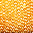 Close up view of the working bees on honey cells - Stok fotoğraf