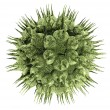 Bacteria virus render in green color isolated on white - Stock Photo