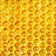 Unfinished honey in honeycombs - Stok fotoraf