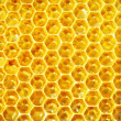 Unfinished honey in honeycombs - Zdjęcie stockowe