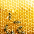 Close up view of the working bees on honey cells — Stock Photo #21809045