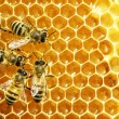 Close up view of the working bees on honey cells — Stock Photo #21809217