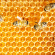 Close up view of the working bees on honey cells - Photo