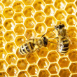 Close up view of the working bees on honey cells - Stock fotografie