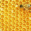 Close up view of the working bees on honey cells - Foto Stock