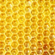 Unfinished honey in honeycombs - Foto Stock