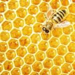 cerrar la vista de las abejas trabajando en las células de la miel — Foto de Stock   #21809931