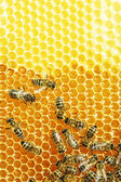 Close up view of the working bees on honey cells — Stock Photo
