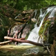 Fresh water stream with waterfall in mountain forest — Wideo stockowe