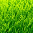 Healthy grass and soil - Photo