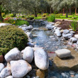 Spring flowers in the Asian japanese garden with olive trees - Stock Photo