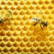 Close up view of the working bees on honey cells — Стоковая фотография