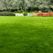 Stock Photo: Grass in beautiful garden