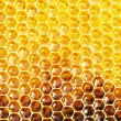 Unfinished honey in honeycombs — Stock fotografie