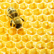 Close up view of the working bees on honey cells — Stock Photo #21812207