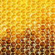 Unfinished honey in honeycombs — ストック写真