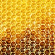Unfinished honey in honeycombs — Stok fotoğraf