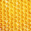 Unfinished honey in honeycombs - Stockfoto