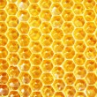 Stock Photo: Unfinished honey in honeycombs