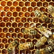 Foto Stock: Close up view of the working bees on honey cells