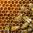 图库照片: Close up view of the working bees on honey cells