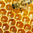 Close up view of the working bees on honey cells - Foto de Stock