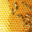 Close up view of the working bees on honey cells — Foto Stock