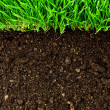 Foto de Stock  : Healthy grass and soil